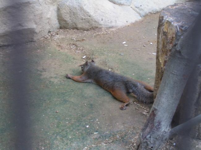 王子動物園にて.JPG